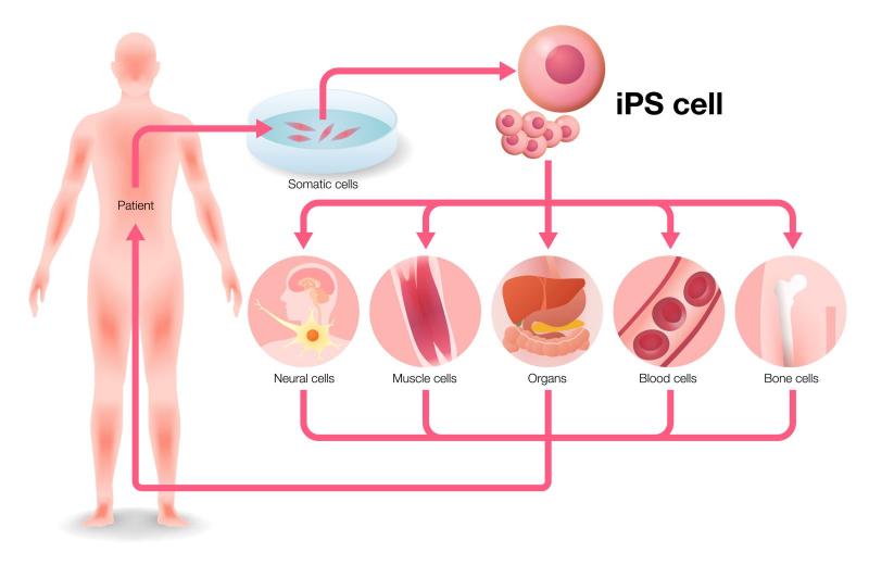 Tái tạo các tế bào máu mới