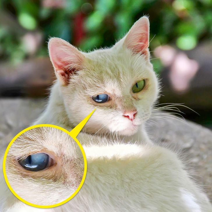 Thú cưng bị rụng lông quanh mắt