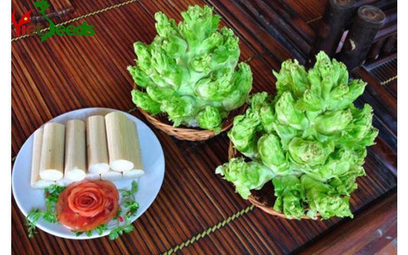 Viet Seeds