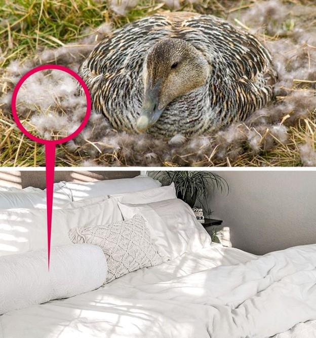 Bộ chăn ga gối đệm giường ngủ được làm từ những vật liệu tốt và hiếm nhất
