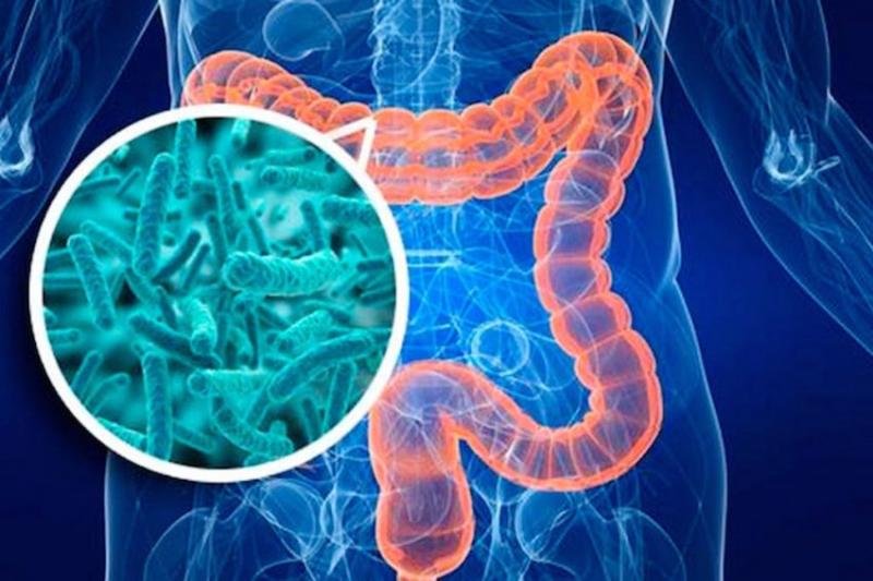 Bổ sung lợi khuẩn cho cơ thể