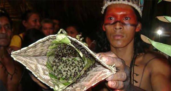 Brazil: hiến mình cho loài kiến Bullet vùng Amazon gắp đau đớn