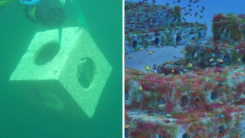 Các khối đá ngầm nhân tạo có thể tái tạo môi trường biển cho các loài động vật
