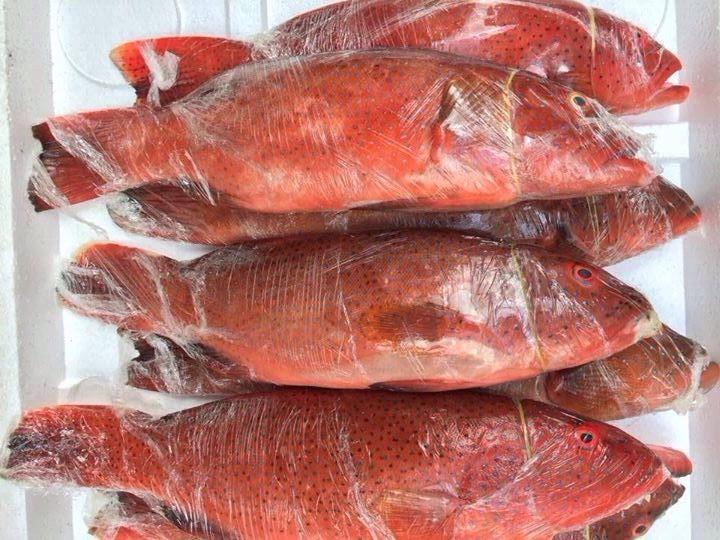 Chả cá Lý Sơn Đà Nẵng