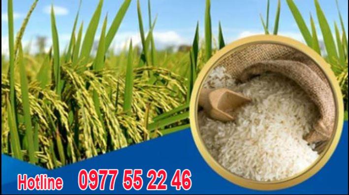 Đại lý gạo Đông Dương