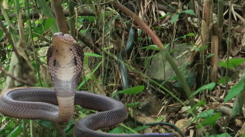 Gặp rắn