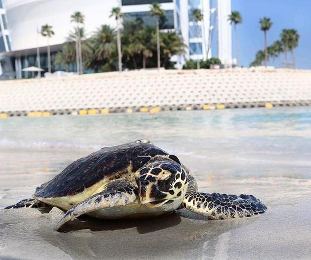 Khách sạn còn có một bệnh viện riêng cho loài rùa biển