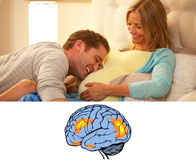 Mang thai làm thay đổi cấu trúc của não bộ