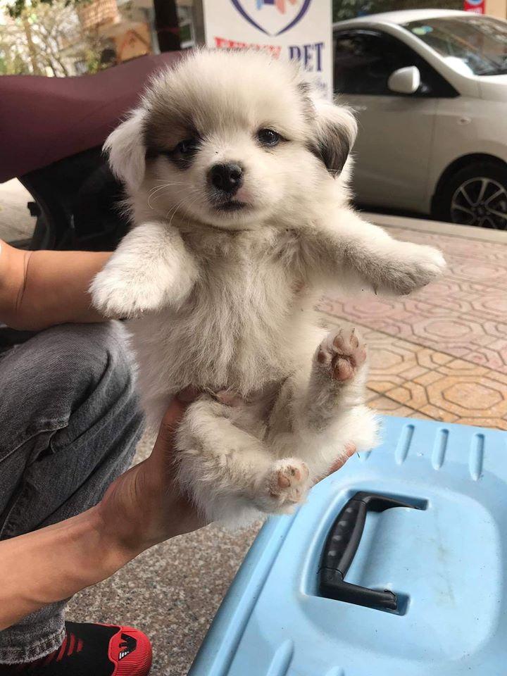 Phòng Khám Thú Y Thái Bình - Funny Pet