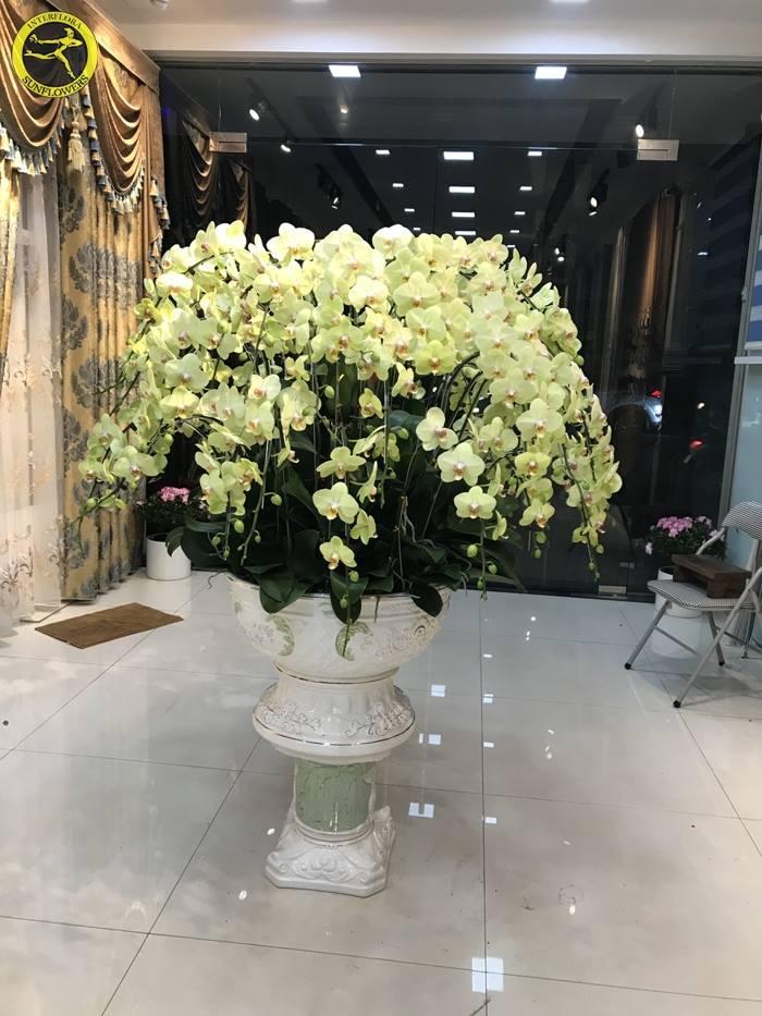 Shop hoa tươi Sunflowers