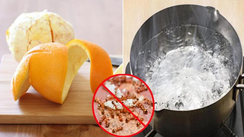 Sử dụng vỏ cam một loại thuốc đuổi muỗi và kiến