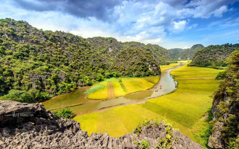 Tam Cốc - Ninh Bình: Tháng 5 – mùa lúa chín vàng