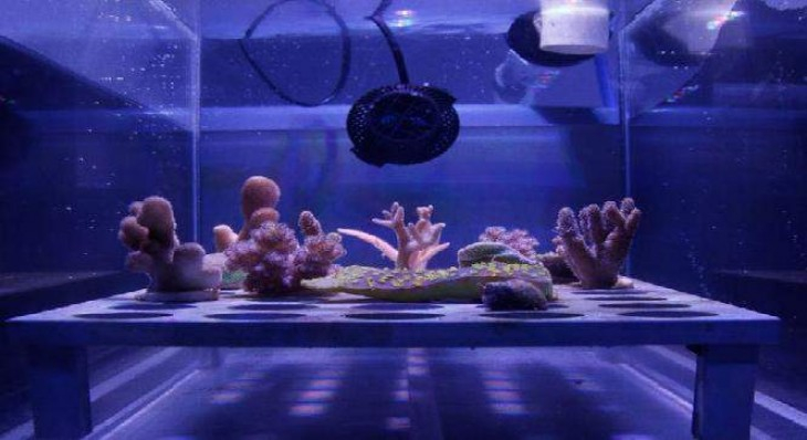 Tấm chắn nắng siêu mỏng bảo vệ các rạn san hô khỏi tia nắng mặt trời