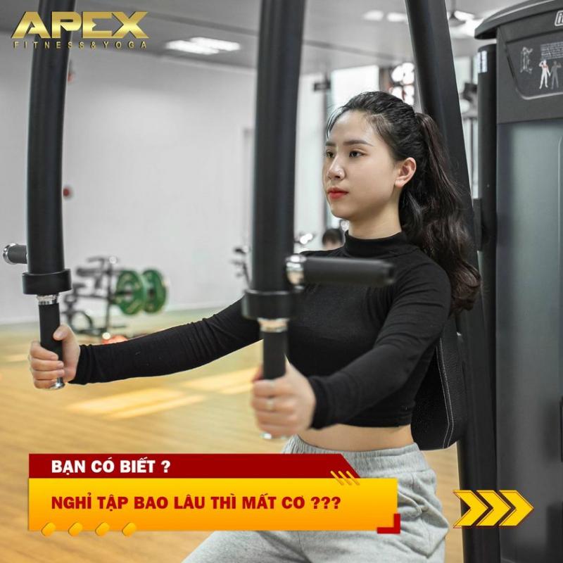 Apex Fitness - Yoga Linh Đàm