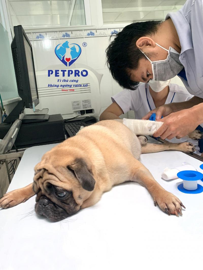 Bệnh Viện Thú Y Pet - Pro