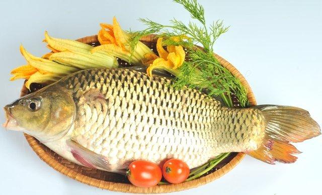 Các loại cá