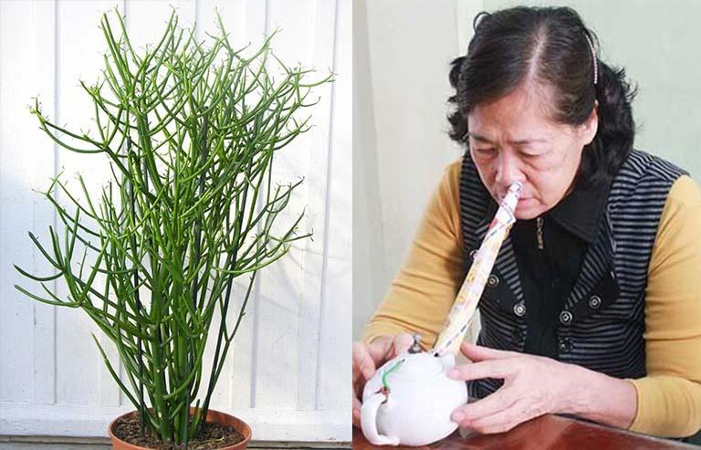 Cách chữa viêm mũi dị ứng bằng cây giao (xương cá)
