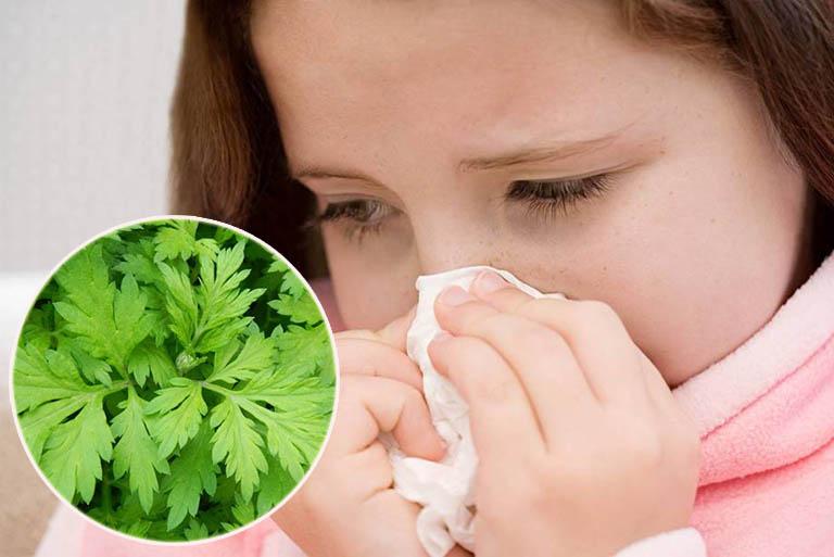Chữa viêm mũi dị ứng bằng ngải cứu
