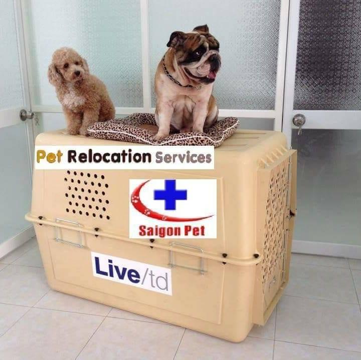 Saigon Pet Veterinary Hospital