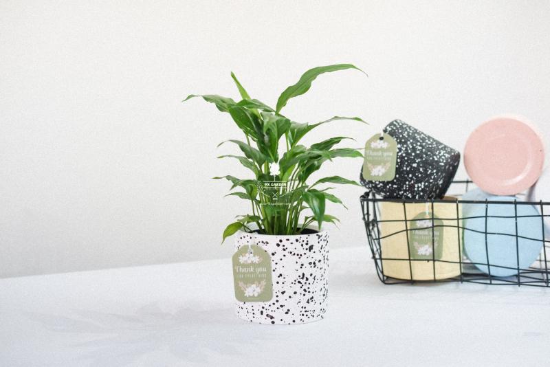 Shop Cây Cảnh Mini 9X Garden