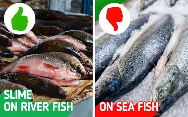 Vảy cá cũng là một dấu hiệu nhận biết tuyệt vời