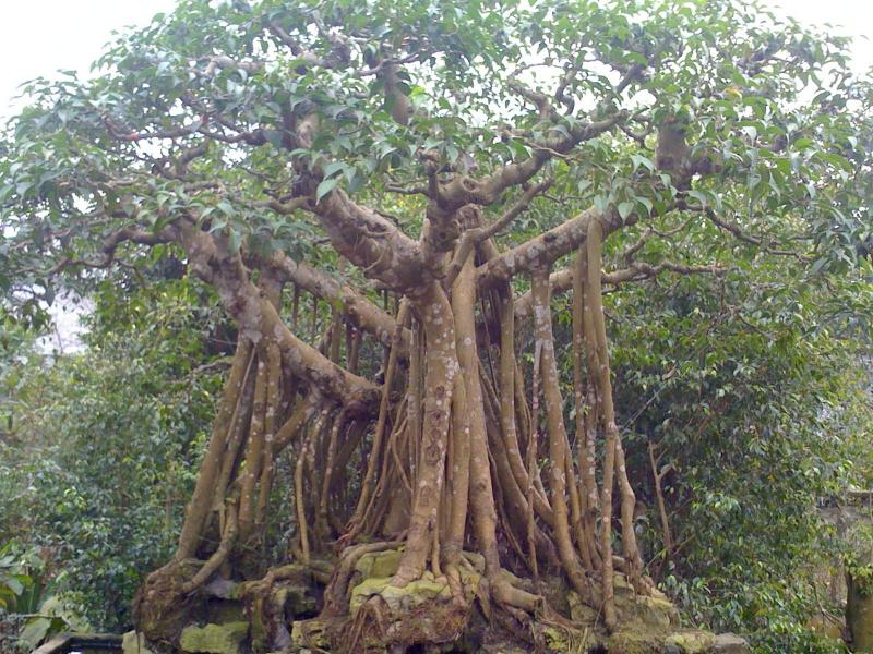 Câu đố về cây cối số 3