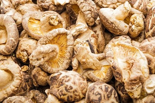 Chiết xuất của nấm