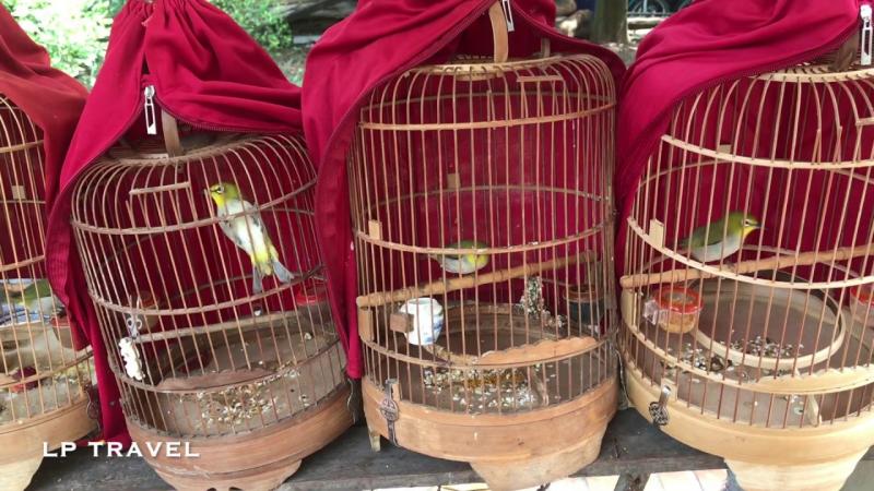 Chợ Chim Cảnh Yên Phúc