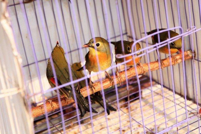 Chợ Chim Hoàng Hoa Thám