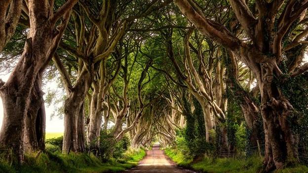 Con đường cây đẹp ma mị - Bắc Ireland