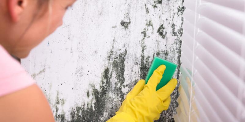 Dọn dẹp nhà của bạn