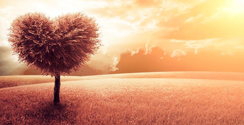 Hạnh Phúc Là Do Tôi Ảo Tưởng - Kim Ngân