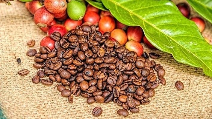 Lựa chọn những hạt cà phê hữu cơ
