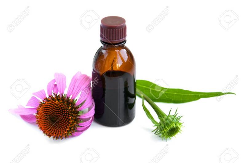 Rượu hoa Echinacea (hoa cúc tím)