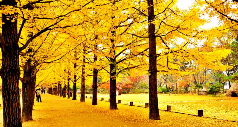Sáng nay mùa thu