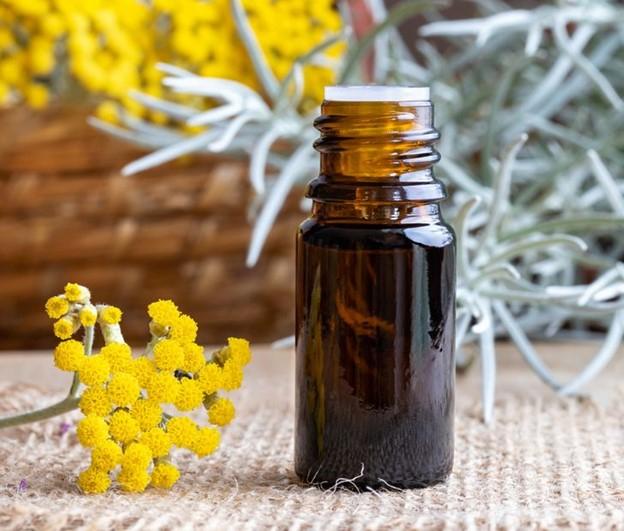 Thoa tinh dầu helichrysum lên da của bạn
