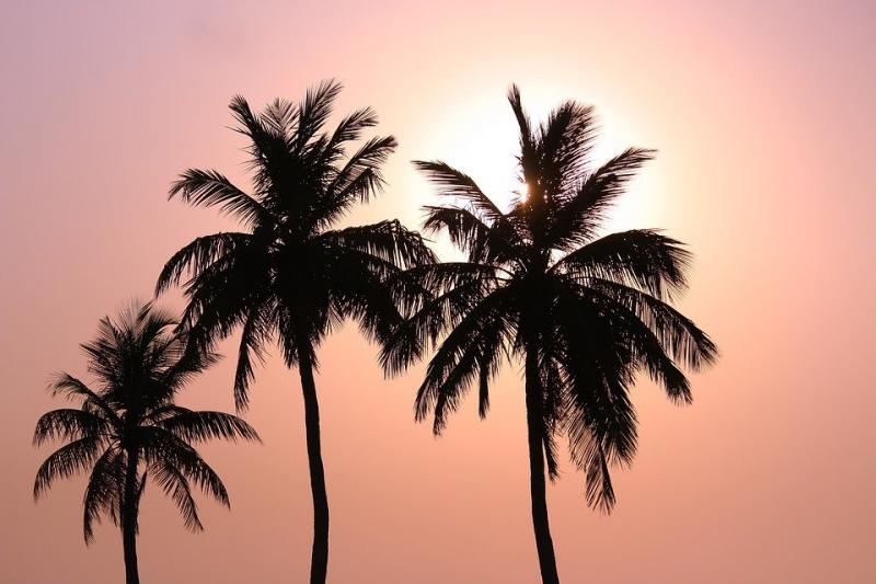 Bài văn thuyết minh về Cây dừa số 4