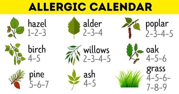 Các loài cây thụ phấn theo mùa dễ gây dị ứng cần tránh