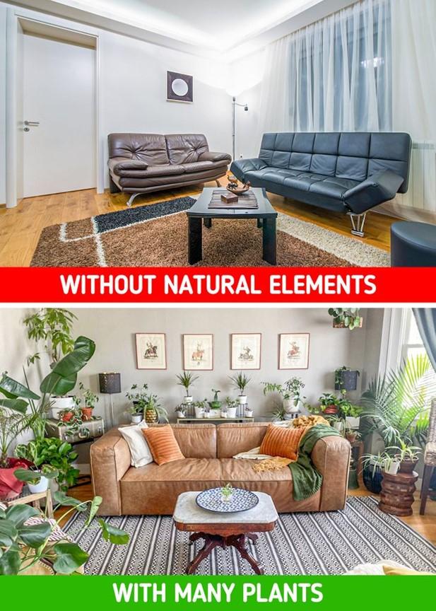 Không có cây cối và hoa lá