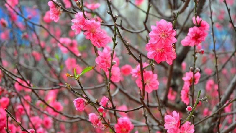 Bài văn tả cảnh một buổi sáng mùa xuân số 5