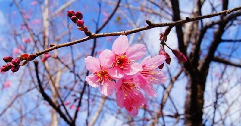 Bài văn tả cảnh một buổi sáng mùa xuân số 7