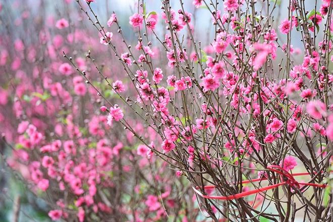 Bài văn tả cảnh một buổi sáng mùa xuân số 8