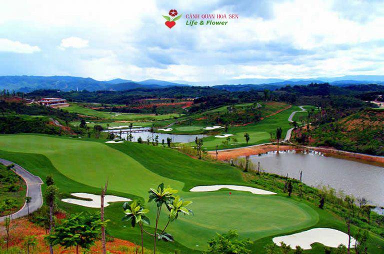 Công ty TNHH cây xanh cảnh quan Hoa Sen Việt