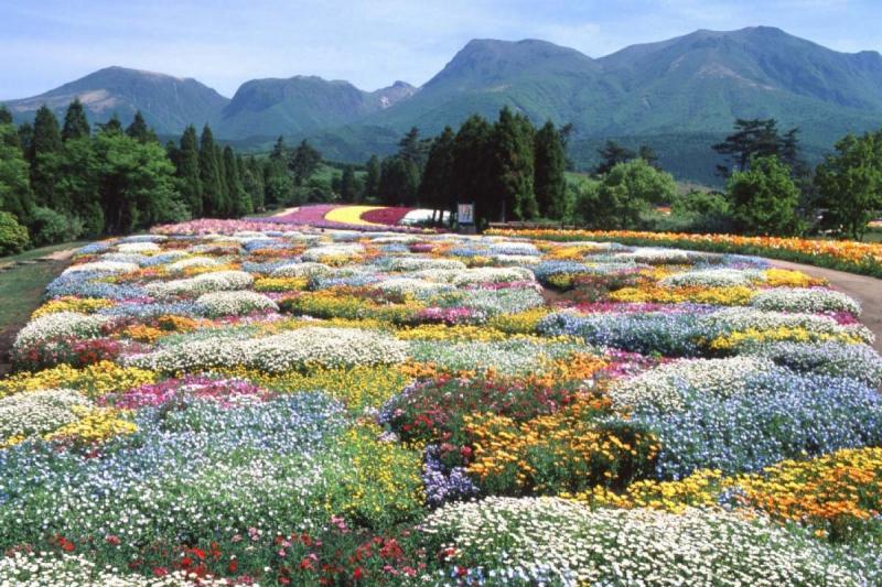 Công viên hoa Kuju, tỉnh Oita