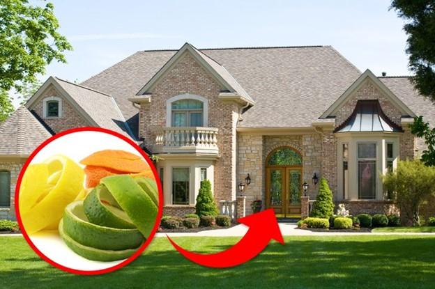 Đặt vỏ cam quýt xung quanh nhà bạn