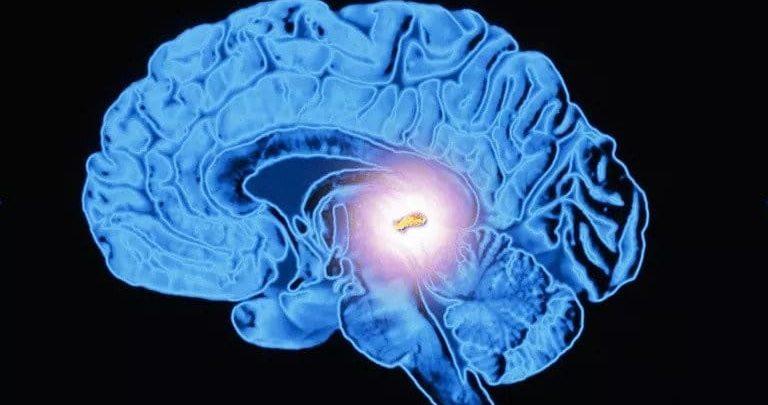 Giấc ngủ, chức năng của melatonin ở tuyến tùng