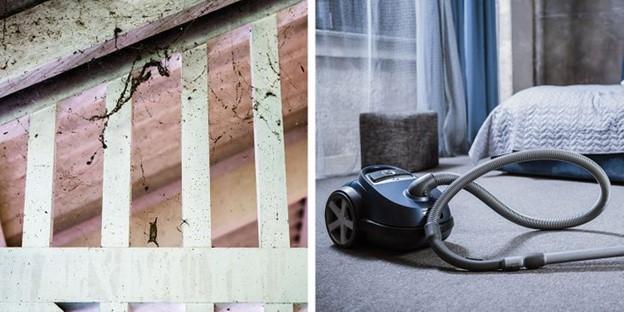Giữ cho ngôi nhà và môi trường xung quanh bạn thật sạch sẽ
