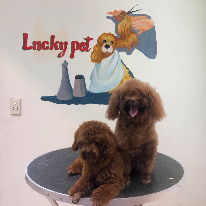 Lucky Pet