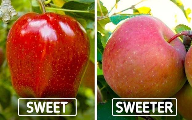 Màu sắc của táo không liên quan gì đến độ ngọt