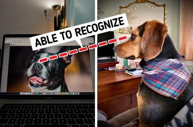 Nhờ TV ván hình phẳng độ phân giải cao, chó cũng có thể nhìn thấy ván hình TV như con người